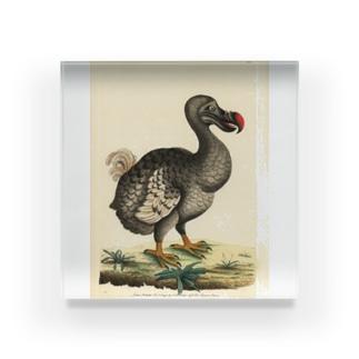 絶滅したドードー鳥 アクリルブロック
