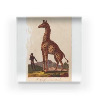 『博物学の普遍的システム』 Acrylic Block