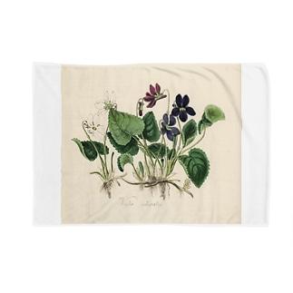 スミレ Blankets