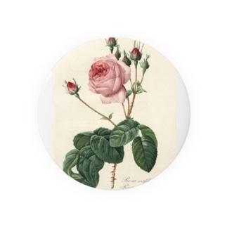 『バラ図譜』  缶バッジ
