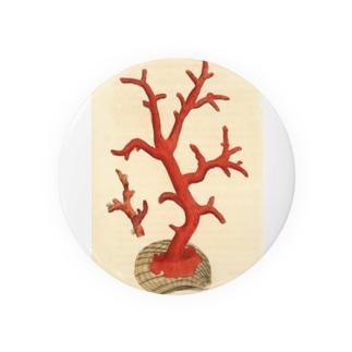 赤サンゴ 缶バッジ