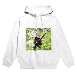 Lesser panda フーディ
