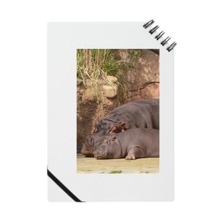 spring hippo Notes