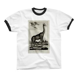 ディドロ自然史 リンガーTシャツ
