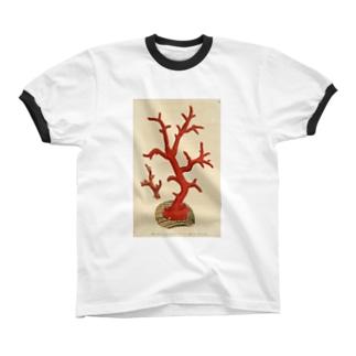赤サンゴ リンガーTシャツ