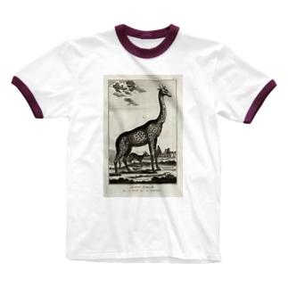 ディドロ自然史 Ringer T-shirts