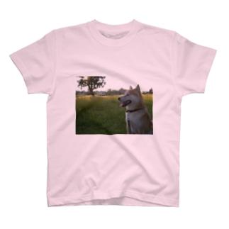 ぷちしば パート5 Tシャツ