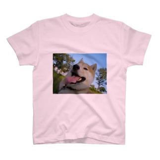 ぷちしば パート6 Tシャツ