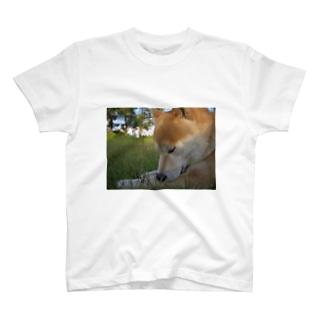 ぷちしば パート7 Tシャツ