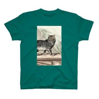 ネコちゃん Tシャツ