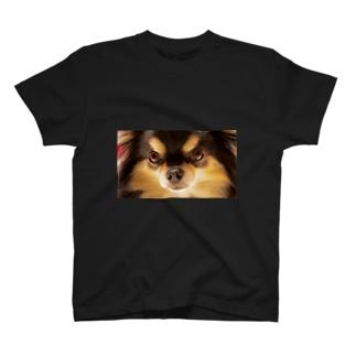チワワ(ブラックタン) T-shirts