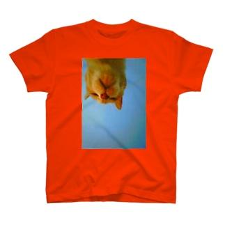 大好きなおばあちゃんにゃんこ T-shirts