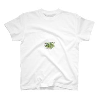 多肉植物盛り合わせ Tシャツ