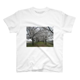 2014年 満開桜 Tシャツ