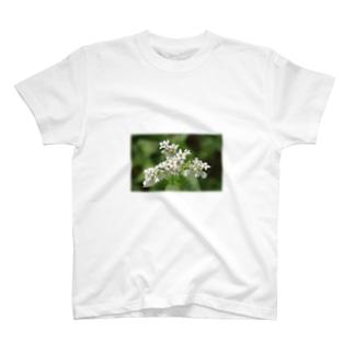 そばの花 Tシャツ