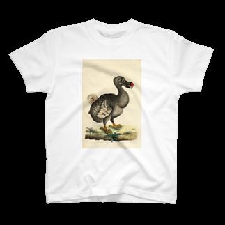 絶滅したドードー鳥 Tシャツ