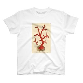 赤サンゴ Tシャツ