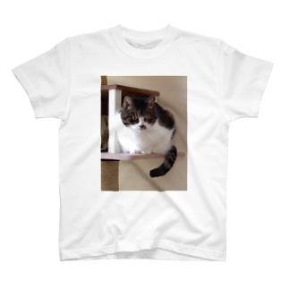 ねこタワーのうちの子 T-shirts