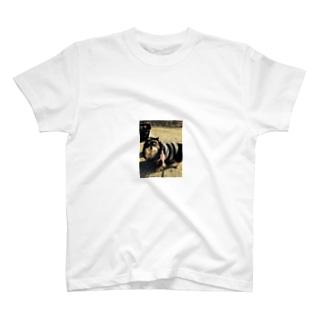 ちょっとお洒落なさん太郎のやつ T-shirts