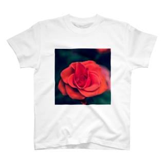 bara T-shirts
