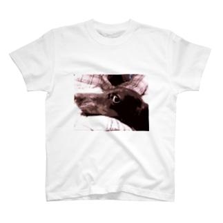 I LOVE DACKS T-shirts