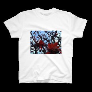 げんしょうのデイゴ満開 T-shirts
