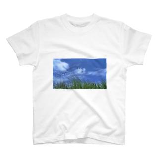 ざわわ T-shirts