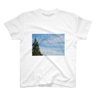P-Boxのblue sky T-shirts