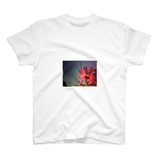 Bee&Cosmos T-shirts