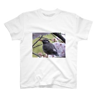 桜にムクドリ T-shirts