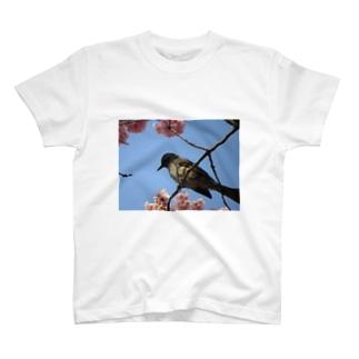 ヒヨドリと桜 T-shirts