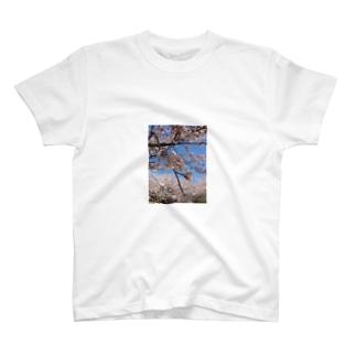 tes T-shirts