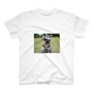 シュナウザー ソルト&ペッパー T-shirts