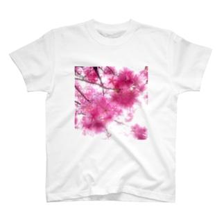 河津桜 T-shirts