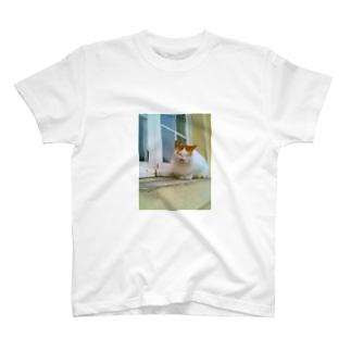 マルタ猫の幸福(ブサカワ) T-shirts