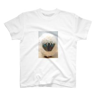 クロヒツジ T-shirts