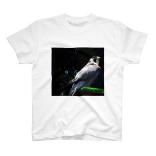 HAYABUSA T-shirts