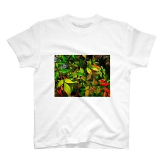 雨露 T-shirts