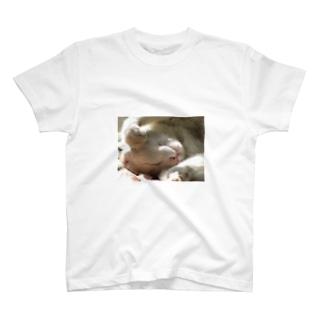 お昼寝白にゃ T-shirts