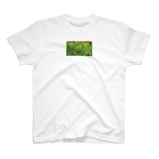 麦 T-shirts