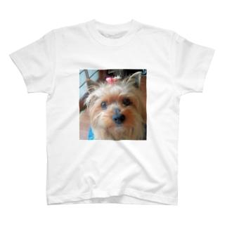 ヨーキーのランちゃん T-shirts