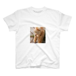 ぬこ ・ω・ T-shirts