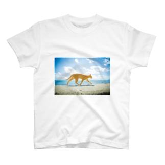 青空とネコ T-shirts