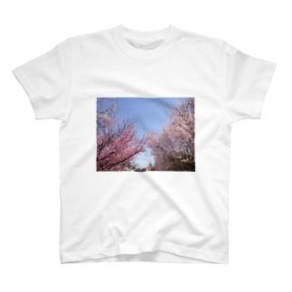 サクラ T-shirts