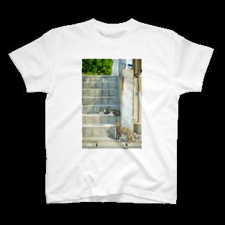 猫写真家 森永健一 Feel So High shopのばったり出くわした T-shirts