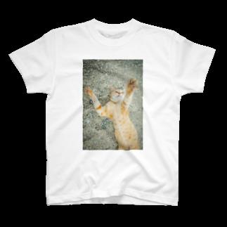 猫写真家 森永健一 Feel So High shopのうにゃ! T-shirts