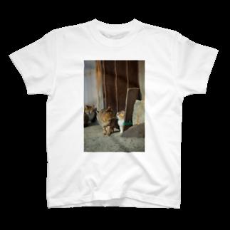 猫写真家 森永健一 Feel So High shopのキス T-shirts
