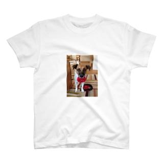 お願いだから遊んで… T-shirts