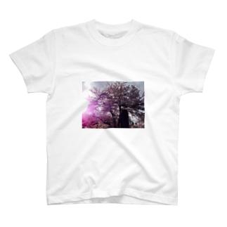 満開の桜 T-shirts