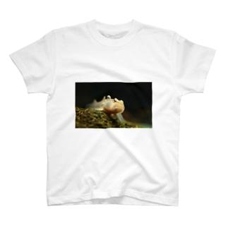 ヨシノボリ T-shirts